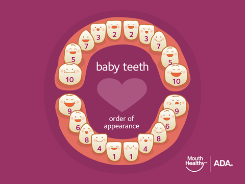 The order of appearance of Baby Teeth